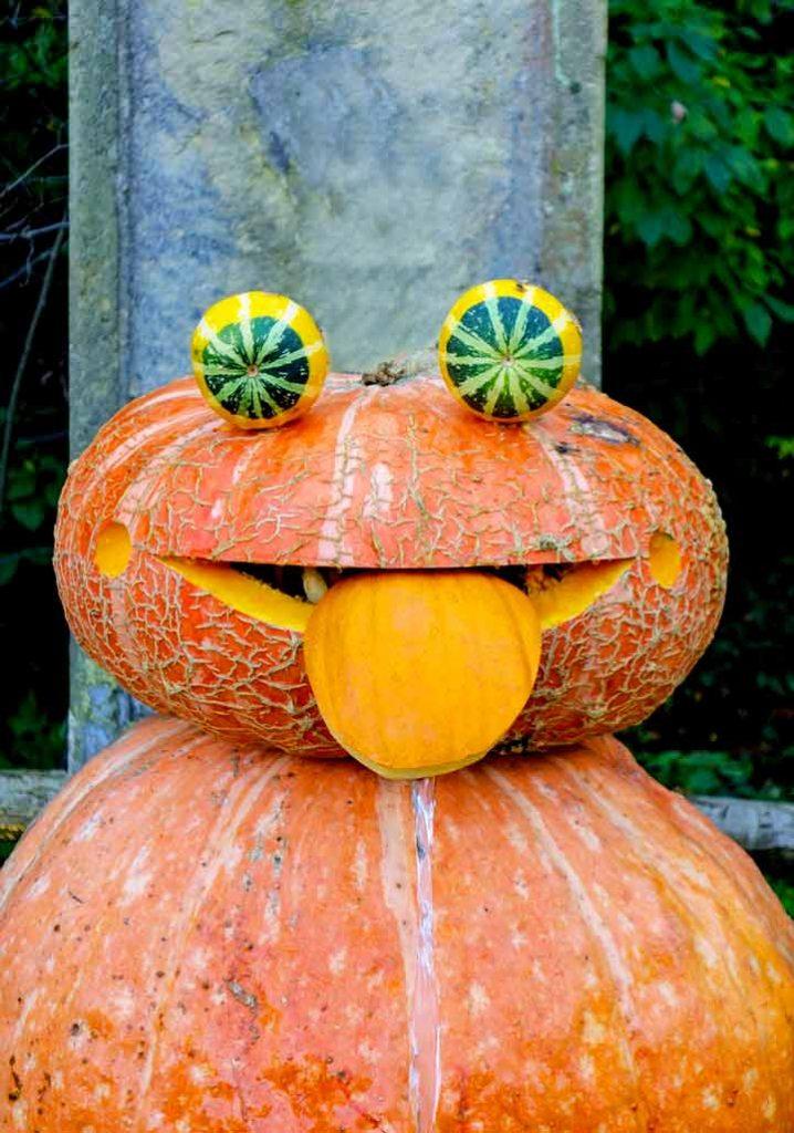 funny pumpkin frog