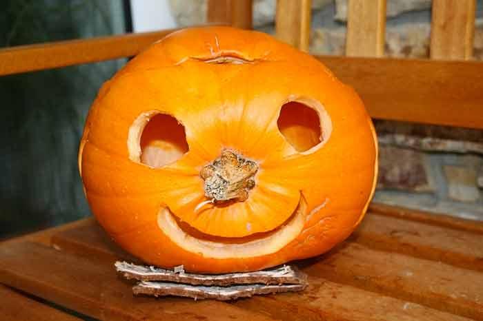 sideways pumpkin dace