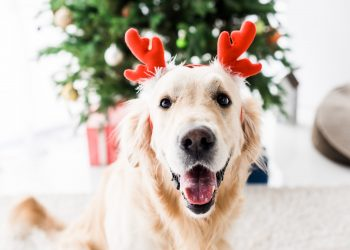 How to Keep Your Pets Safe at Christmas Time